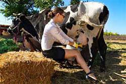 Как открыть бизнес в сельской местности