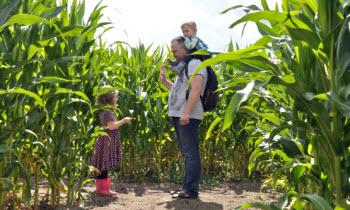 Кукурузный лабиринт как бизнес